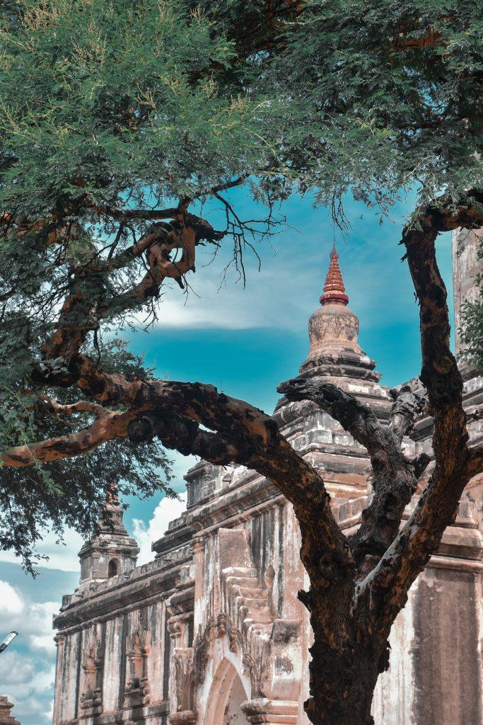 green tree near temple